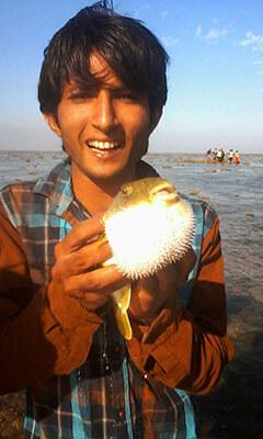 Narara_pufferfish